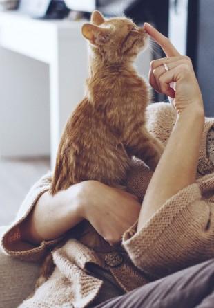 Arată-i pisicii tale cât o iubești, îngrijind-o așa cum trebuie!